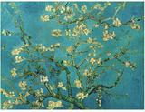 Branches d'amandier en fleurs, Saint-Rémy, 1890 Posters par Vincent van Gogh