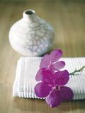 Rosa Orchidee Kunstdrucke von Amelie Vuillon