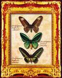 Butterflies II Prints