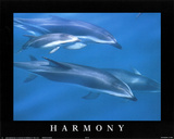 Harmony School of Dolphins Print