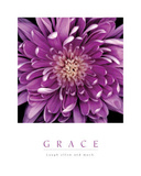Mum Flower Inspirational Motivational Prints by Grace Purple