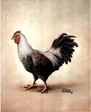 Black & White Chicken (Animal) Prints