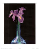 Irises Blue Vase (Color Close-Up) Prints