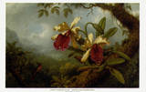 Orchids and Hummingbirds Kunst von Martin Johnson Heade