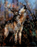 Gray Wolf Howling Prints by Dan McManis