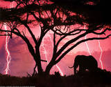 Animal Elephant Lightning Storm Print