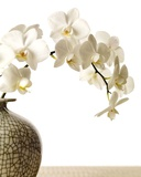 Orchid Branch Prints by Stephane De Bourgies