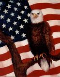 Bald Eagle (USA Flag) Posters
