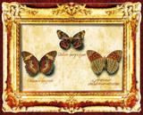 Butterflies III Prints
