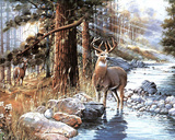 White Tail Buck Poster by Andres Orpinas