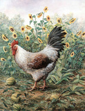 Chicken in Sunflower Patch Posters