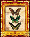 Butterflies II Posters