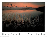 Geese over Marsh Poster par Sanford Agliolo