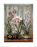 Rustic Orchids Prints