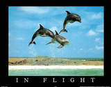 In Flight Dolphins Art Photo Poster