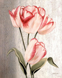 Parrot Tulips Poster by Debra Lake