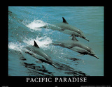 Pacific Paradise 3 Dolphins Art Photo Láminas