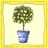 Lemons IV Posters