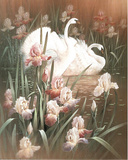 Swans &amp; Irises (Wildlife) Posters