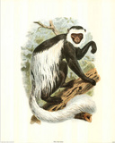 Animal White Tail Monkey Ape Posters