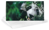 Giant Panda Panoramic Greeting Cards 12 Per Package Juegos de tarjetas de notas