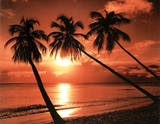 Sunset (Three Palm Trees Over Beach) Photo