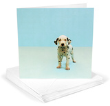 Dalmatian Puppy Greeting Cards 12 Per Package Note Card Sets