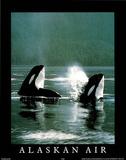 Alaskan Air Orcas Art Photo Posters