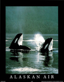 Alaskan Air Orcas Art Photo Posters