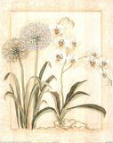 Pretty White Floral Botanical Prints