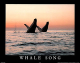 Whale Song Art Photo Plakater