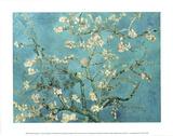 Ramos com flor de amêndoa, San Remy, cerca de 1890  Posters por Vincent van Gogh