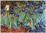 Schwertlilien im Garten Poster von Vincent van Gogh