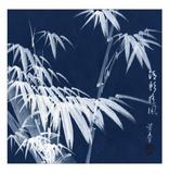 Bamboo B&W Detail Kunstdrucke
