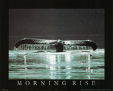 Morning Rise Whale Tail Art Photo Poster