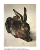 A Young Hare Psters por Albrecht Drer
