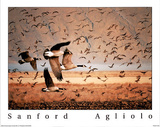 Canada Geese in Flight Posters par Sanford Agliolo