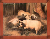 Pigs (In Barn) Poster