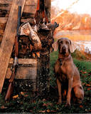 Animal Dog Gun Hunting Posters