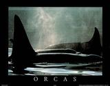 Orcas Print