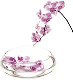 Orchidees Kunstdrucke von Stephane De Bourgies