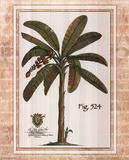 Palmier Affiches