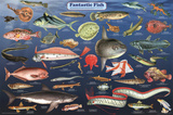 Laminated Fantastic Fish Educational Science Chart Poster Pôsters