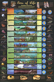 Laminated Eras of Life Geology Educational Science Chart Poster Pôsters