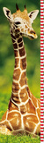 Giraffe (Growing Up) Art Poster Print Poster