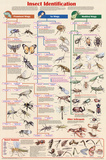 Laminated Insect Identification Educational Science Chart Poster Print