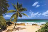 Palm Beach (Tropical Landscape Photo) Art Poster Print - Reprodüksiyon