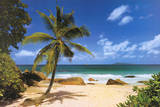 Palm Beach (Tropical Landscape Photo) Art Poster Print Print