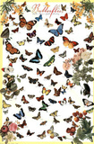 Laminated Butterflies Educational Poster Pôsters