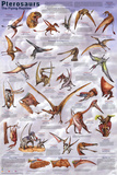 Pterosaurs Educational Dinosaur Science Chart Poster Prints